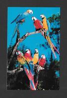 ANIMAUX - ANIMALS - OISEAUX - BIRDS - MACAWS - PARROT JUNGLE FLORIDA - PARROTS - PERROQUETS - BY KOPPEL COLOR CARDS - Oiseaux
