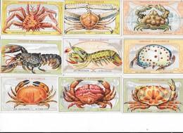 CHROMOS - Collection De 37 Chromos  Les Crustacés  - L 1 - Aiguebelle