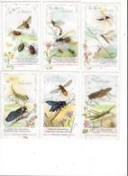 CHROMOS - Collection De 9 Chromos  : Le Monde Des Insectes    - L 1 - Aiguebelle