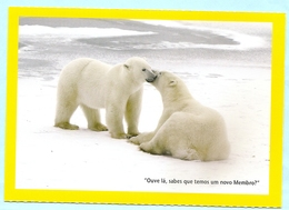 BEARS NATIONAL GEOGRAPHIC POSTCARD - Beren