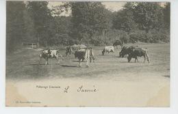 LIMOGES - Pâturage Limousin (vaches ) - Limoges