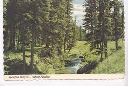 Spearfish Canyon, Fishing Paradise, Black Hills, South Dakota, Postcard [22523] - Verenigde Staten