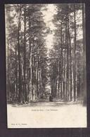 CPA 27 - LES VALMEUX - VERNON - Forêt De BIZY - TB PLAN Chemin Et Arbres - Francia