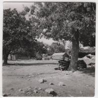 Photo Originale Algérie Chlef Orléansville Séisme Tremblement De Terre 1954 Pontéba - Africa