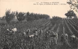 41 - Loir Et Cher / 10013 - Les Vendanges En Sologne - Cueillette Du Raisin - Autres Communes