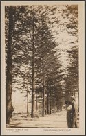 The Esplanade, Manly, Sydney, New South Wales, C.1910s - Rose Stenograph RP Postcard - Sydney