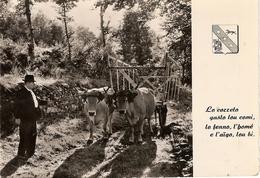12 ATTELAGE DE BOEUFS,oblitéréé AVEYRON - France