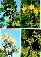 Medicinal Plants. 25 Postcards In The Folder - Plantes Médicinales