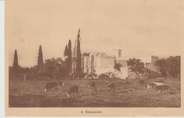 C. P. A. - A KHASNADAR - TROUPEAU DE VACHES - TOURTE ET PETITIN - Túnez