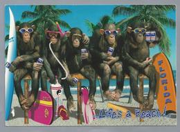 US.- FLORIDA. Life's A Beach!.. Apen. Monkey's - Gruss Aus.../ Gruesse Aus...