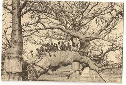 S7150 - Afrique Occidentale - Baobabs - Cartes Postales