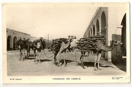 S7163 - Firewood On Camels - Soudan