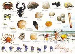 Bretagne - Les Grèves Vous Attendent - Pêche à Pied - Coquillages & Crustacés - Dessin De Jean-Pierre Arcile - Bretagne