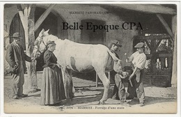 64 - BIARRITZ Panoramique - # 3096 - Ferrage D'une Mule ++++ Édition Du Magasin Au Souvenir ++++ TOP / Vieux Métier - Biarritz
