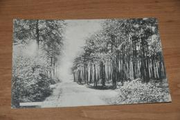 6836- BONSECOURS, LE BOIS DE SAPINS - 1906 - Péruwelz