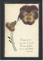 CPA Herbier Vraies Fleurs Séchées Naturelles En Relief Sur Carte Postale 9 X 14 Non Circulé Pensée Lamartine - Flores, Plantas & Arboles