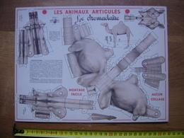 Ancienne PLANCHE VOLUMETRIX Animaux Articules DROMADAIRE Montage Facile Aucun Collage - Découpis