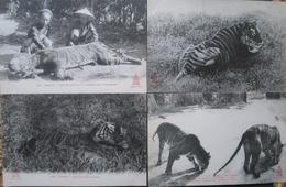 Indochine  Lot 4 Cpa Tigre Chasse  Cpa Tonkin - Vietnam