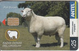 URUGUAY - Animal, Poll Dorset(440a), 06/06, Used - Uruguay
