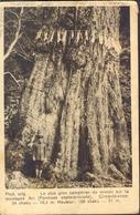 FDORMOSA - FORMOSE  SEPTENTRIONALE - 1928 - Formose