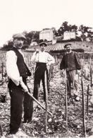 X18004 Peu Commun Coteaux Village SANCERRE En BERRY (18) Vignerons Sancerrois PIOCHAGE Travail Vigne 1940s Photo-Bromur - Sancerre