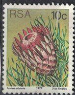 Afrique Du Sud 1977 Used Plante Ladismith Sugarbush Protea Aristata SU - Afrique Du Sud (1961-...)
