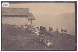 VACHES DANS LES ALPES - TB - Suisse