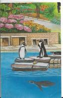 PINGOUINS DANS UN LAC DU ZOO DE LONDRES LONDON - Other