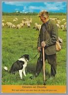 NL.- GROETEN UIT. GROETEN OET DRENTHE. Schaapherder. Schapen. Hond. - Gruss Aus.../ Gruesse Aus...