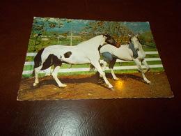 B705  Cavalli Non Viaggiata Presenza Piega Ad Angolo - Caballos