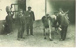 Pays Basque  Scene D'achat D'une Vache - France