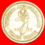 # LILY (1955-1964): RHODESIA AND NYASALAND ★ 3 PENCE 1957! LOW START ★ NO RESERVE! - Rhodésie