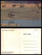 EC [00108] - RHODESIA ZIMBABWE - ZEBRA IN WANKIE NATIONAL PARK - Zimbabwe