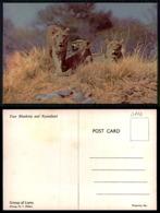 EC [00110] - RHODESIA ZIMBABWE GROUP OF LIONS - Zimbabwe