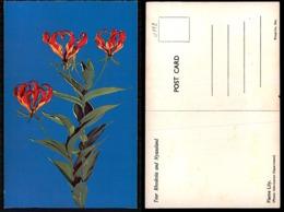 EC [00112] - RHODESIA ZIMBABWE- FLAME LILY - Zimbabwe
