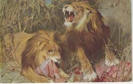 CPA ANIMAL - REPOS DANS LE DESERT - TADE STYKA - LIONS - Lions