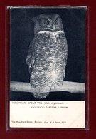 ANIMAUX-CPA ZOOLOGICAL GARDEND LONDON - VIRGINIAN EAGLE-OWL - Birds