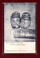 ANIMAUX-CPA ZOOLOGICAL GARDEND LONDON - SPOTTED OWLETS - Birds