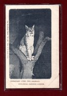 ANIMAUX-CPA ZOOLOGICAL GARDEND LONDON - CANADIAN LINX - Other