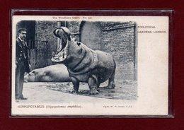 ANIMAUX-CPA ZOOLOGICAL GARDEND LONDON - HIPPOPOTAMUS - Hippopotamuses