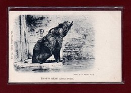 ANIMAUX-CPA ZOOLOGICAL GARDEND LONDON - BROWN BEAR - Bears