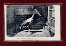 ANIMAUX-CPA ZOOLOGICAL GARDEND LONDON - BLACK NECKED STORK - Birds