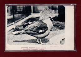 ANIMAUX-CPA ZOOLOGICAL GARDEND LONDON - CROWNED PIGEON - Birds