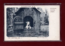 ANIMAUX-CPA ZOOLOGICAL GARDEND LONDON - THY SENTINEL AM I - FOX TERRIER ANGLAIS - Dogs