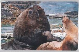 PHONE CARD - ISOLE FALKLAND (E36.25.5 - Isole Falkland