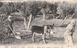 ET-ALGERIE SCENES ET TYPES LABOURAGE -N°2219-A/0049 - Algeria