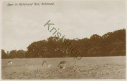 Richmond-Deer In Richmond Park [6A-0.809 - Richmond