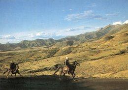 Lesotho - Basotho Ponies On The Mountain Road - Lesotho