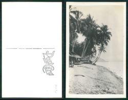 OF [17290] - PAPUA NEW GUINEA - A BEACH IN NEW GUINEA - Papua New Guinea