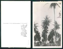 OF [17294] - PAPUA NEW GUINEA - COCOANUT TREES  IN NEW GUINEA - Papua New Guinea